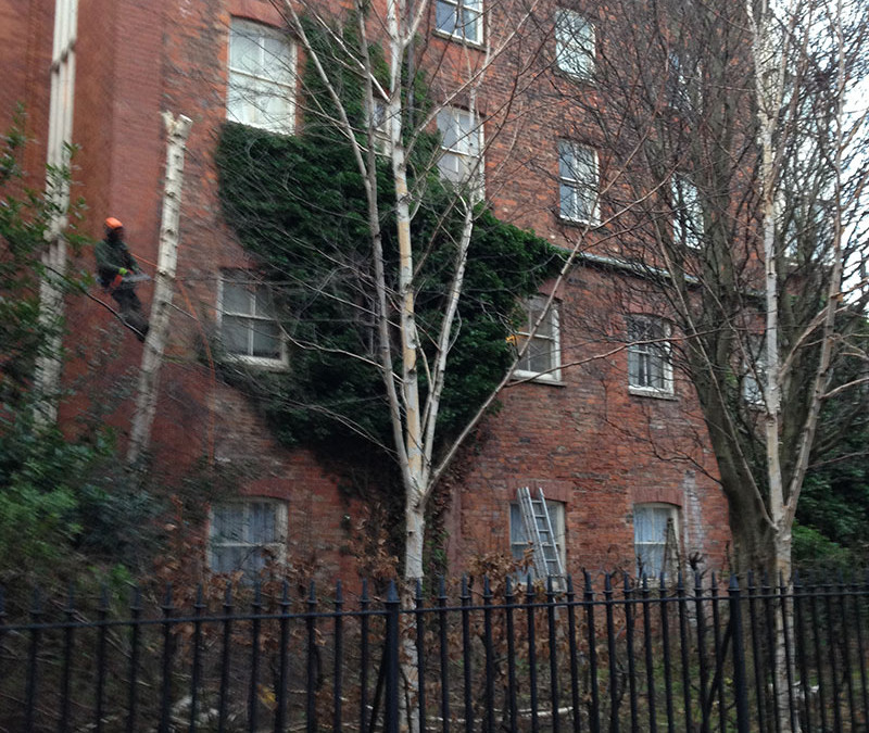 Tree maintenance on Prince Street in Hull old town