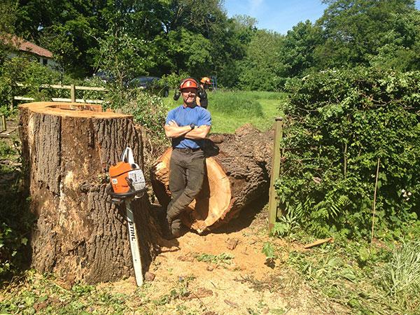 Large Oak in Cottingham
