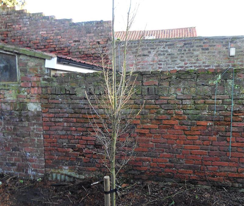 Beverley Tree Planting
