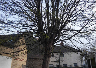 Driffield Tree Surgery