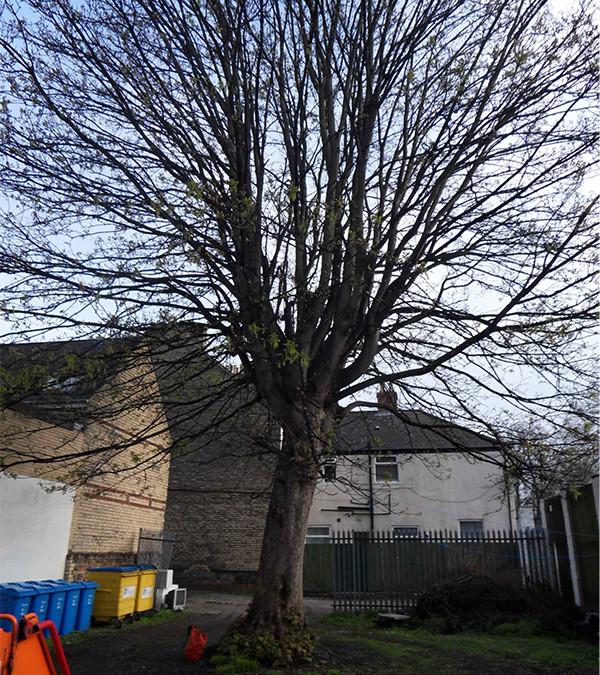 Driffield Tree Surgery