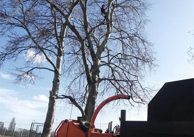 Market Weighton Tree Surgery
