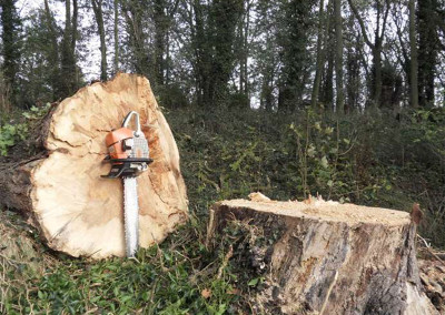 Roos Tree Surgery