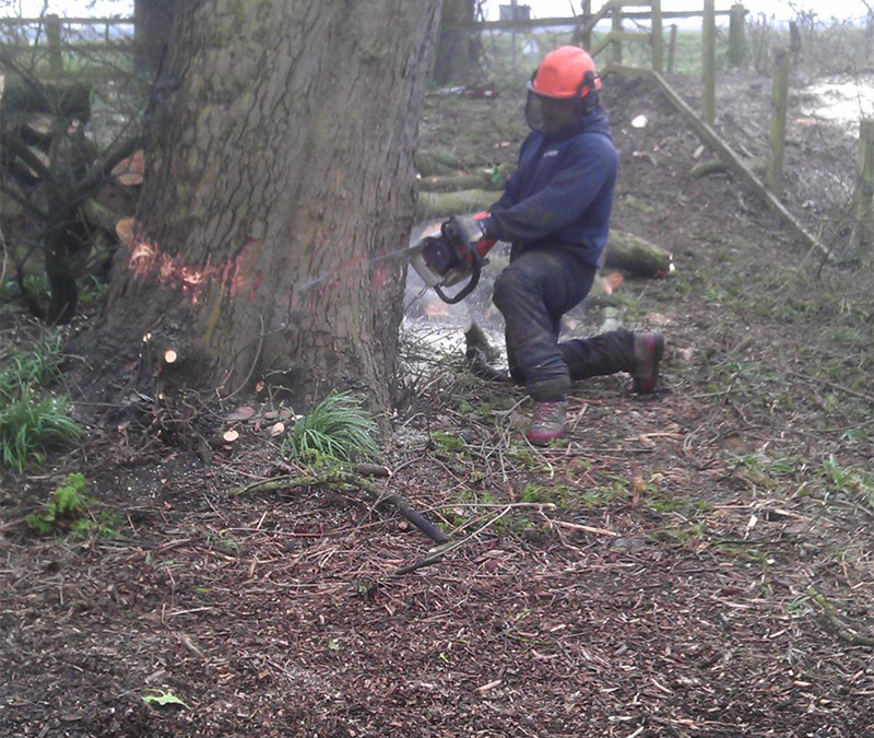South Cave Tree Surgery